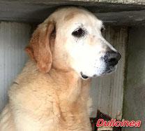 Dulcinea - geb. 01/2006