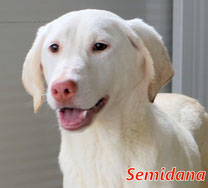 Semidana - Region Lanusei - geb. 08/2021