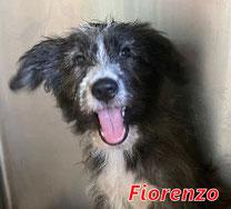 Fiorenzo - geb. 05/2021