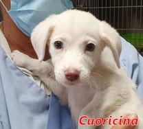 Cuoricina - geb. ca. 08/2020