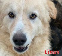 Linus - Region Lanusei - geb. ca. 06/2021
