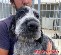 Barbarella (8 Welpen-M1) - geb. 06/2021
