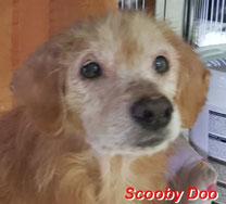 Scooby Doo - geb. 01/2010
