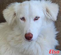 Elsa - geb. 02/2020