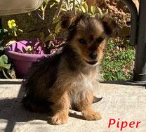 Piper - Region Lanusei - geb. ca. 01/2021