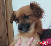 Foxy - Region Lanusei - geb. folgt