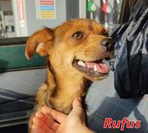 Rufus - Region Lansuei - geb. ca. 08/2020