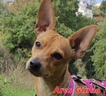 Ares Giulio - Reg.Lanusei - geb. ca.03/2020