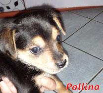 Pallina - Region Lanusei - geb. 09/2020