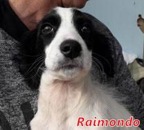 Raimondo (Arca Sarda) - geb. 01/2020