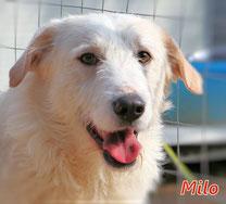 Milo - Region Lanusei - geb. 01/2021