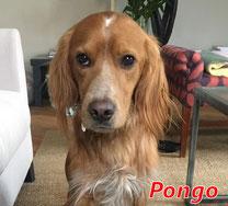 Pongo - geb. 02/2020