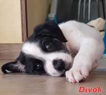 Divok - Region Lanusei - geb. 07/2020