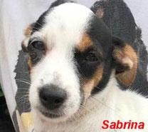 Sabrina - geb. 04/2019