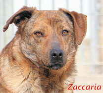 Zaccaria -geb.  05/2017