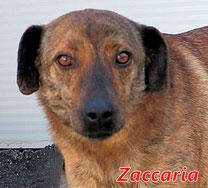 Zaccaria - geb.  05/2017