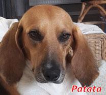 Patata (f) - Arca Sarda - geb. 05/2015