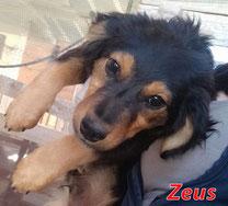 Zeus - Region Lanusei - geb. 12/2020