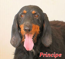 Principe - geb. 01/2009