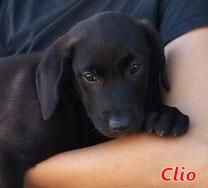 Clio - geb. 01/2021