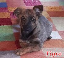 Tigro - geb. 02/2020