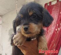 Eugenio - Region Lanusei - geb. 08/2020