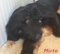 Mirta (f) - Arca Sarda - geb. 03/2020
