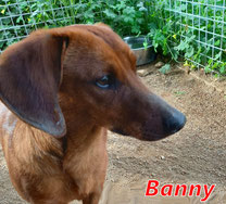 Banny - Region Lanusei - geb. ca. 2018/19