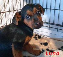 Luna - geb. 10/2020