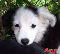 Amy - Region Lanusei - geb. 07/2020