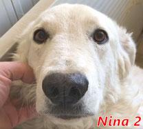 Nina 2 - geb. 01/2018