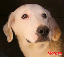 Morgan - geb. 07/2016