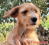 Fragolina - Reg. Lanusei - geb. 04/2021