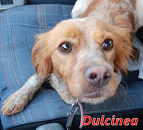 Dulcinea - Reg. Lanusei - geb. ca. 11/2020