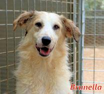 Brunella - Region Lanusei - geb. 08/2021