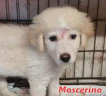 Moscerino - geb. 05/2021