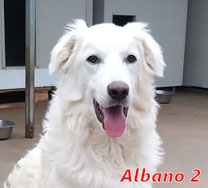 Albano 2 - geb. 07/2020