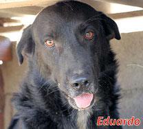 Eduardo - geb. 10/2010
