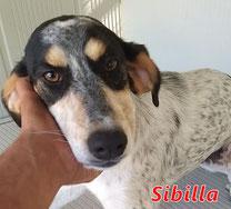 Sibilla - I San Giovesi - geb. 02/2020