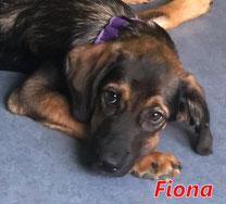 Fiona - geb. 03/2021