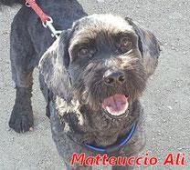 Matteuccio Alì - geb. 01/2020