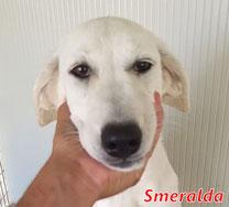 Smeralda - San Giovesi - geb. 02/2020