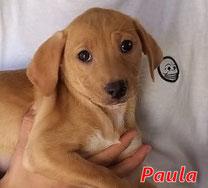 Paula - geb. 01/2021