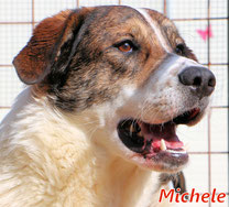 Michele - Reg. Lanusei - geb. ca. 03/2021