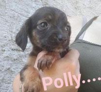 Polly - Region Lanusei - geb. ca. 06/2020