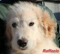 Raffaele - geb.  12/2918