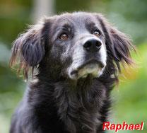 Raphael - 08/2015