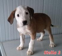 Stella 3 - geb. ca. 11/2020