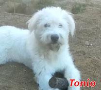 Tonio - Region Lanusei - geb. ca. 05/2021