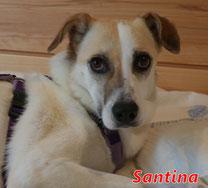 Santina - geb. 01/2015